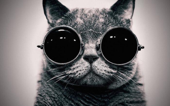 cat-tumblr-backgrounds