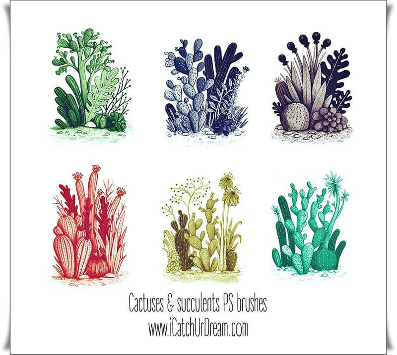 70 Cactuses Plants Brushes