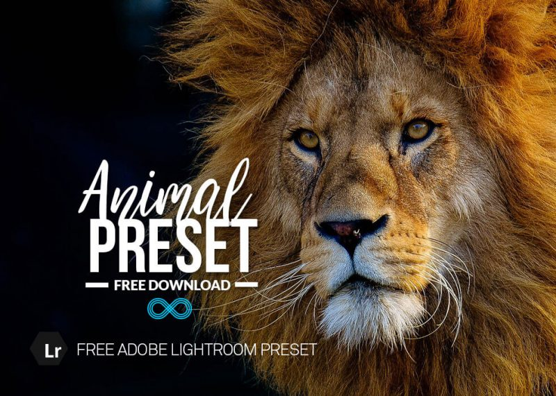 Animal Preset Collection
