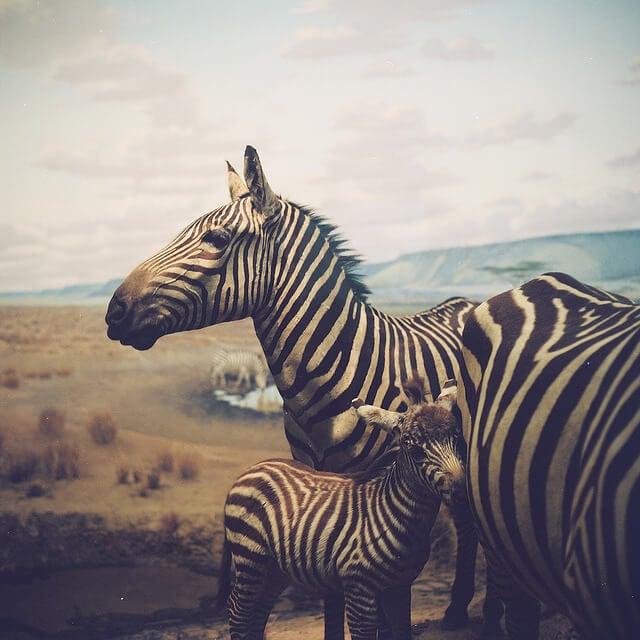 Animal Tumblr Background