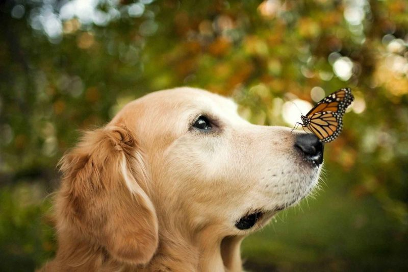 Dog And The Butterfly Wallpaper