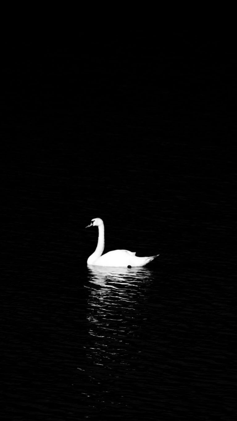 Swan Wallpaper for iPhone